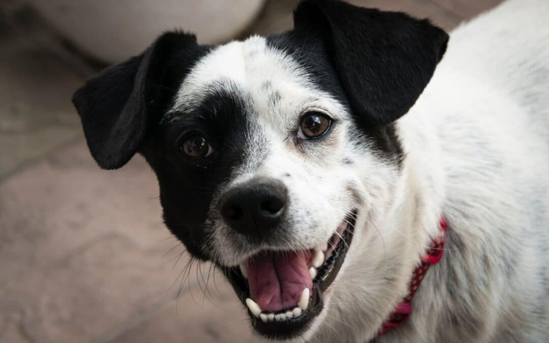 Min hund har separationsangst