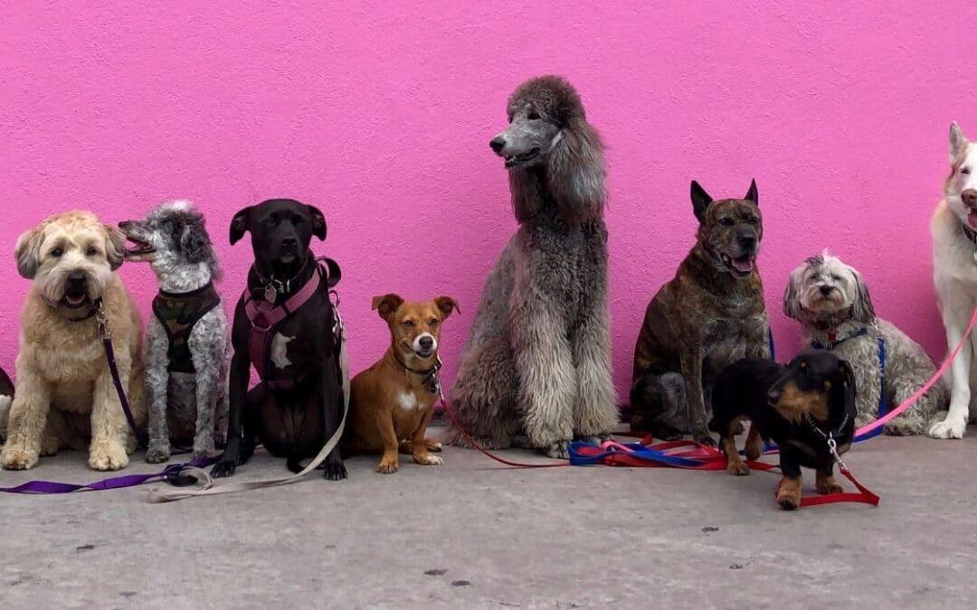 Hvilken hund skal jeg vælge? Inspiration til nye hundeejere!