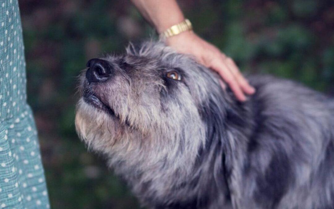 Problemhund – forstå din hund