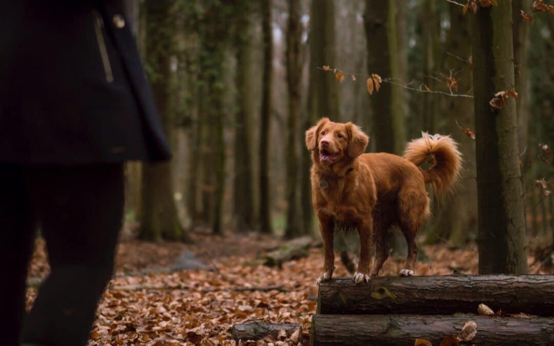 Dominerer eller guider du din hund?