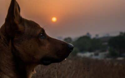 5 tegn på at din hund har oplevet et traume
