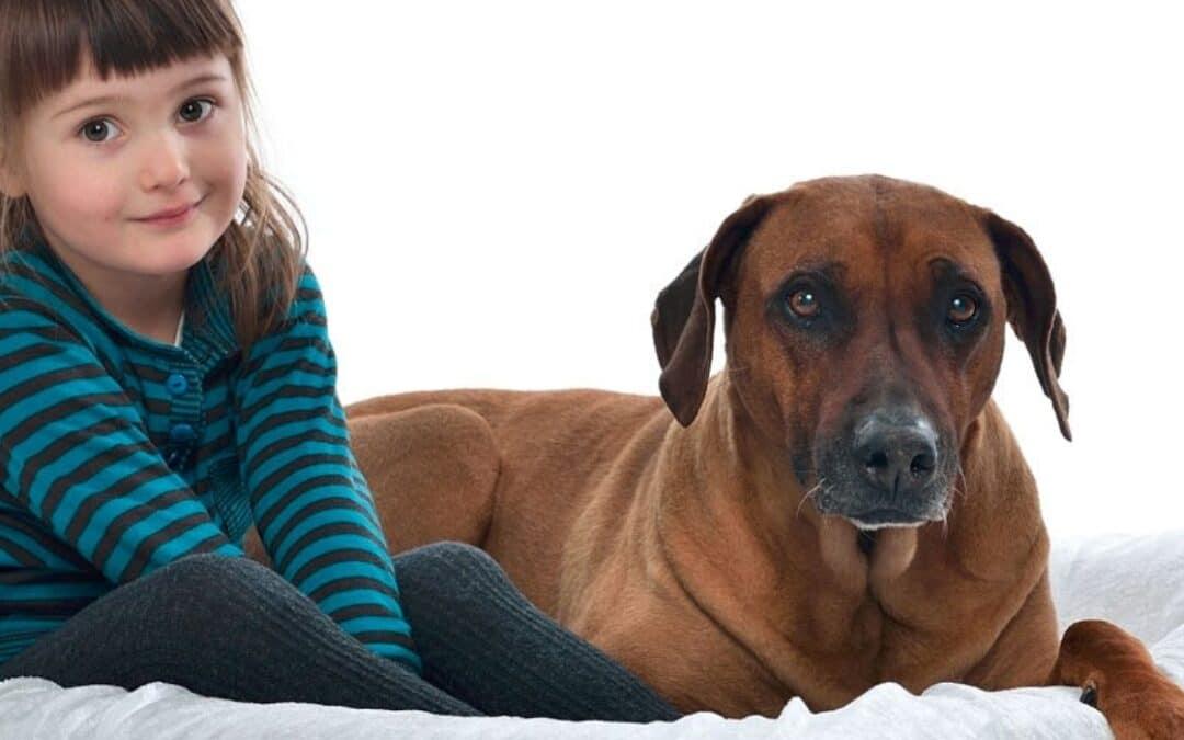 Hunde og børn – fungerer det?