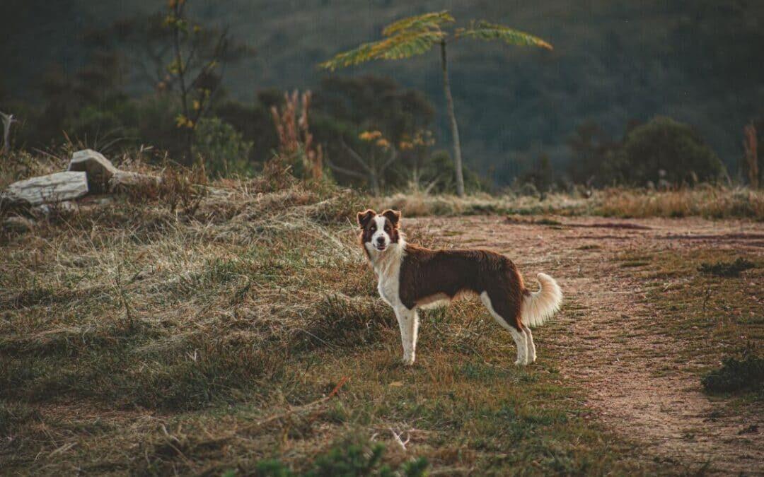 Hundens sprog er naturligt