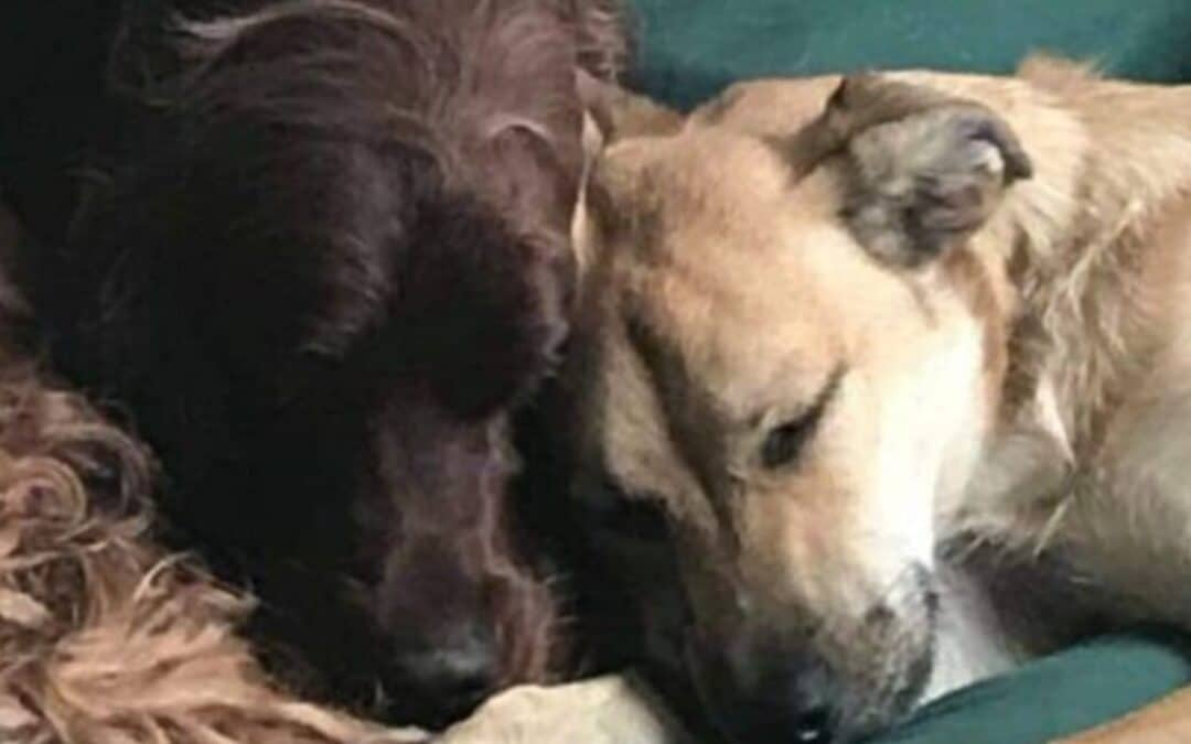 Alene-hjemme-træning og separationsangst – sådan hjælper du din hund